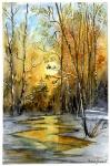 Bouleaux hivers